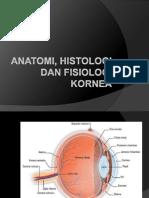 anatomi kornea