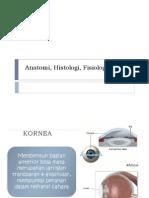 Anatomi, Histologi, Fisiologi Kornea