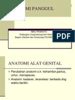 ANATOMI  FISIOLOGI  PANGGUL