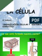 La célula 8°