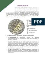 LIPOPROTEÍNAS.docx