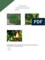 Lembar Diskusi Siswa Kelas X Plantae 2