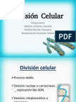 Fisiologia Basica Sa