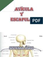 Exposicion Clavicula y Escapula 1