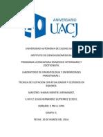 3PARASITOLOGIA PRACTICA TECNICA DE FLOTACION CON FECALIZADOR CESTOSOS EN EQUINOS.docx
