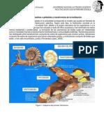 Trabajo individual Paleontología