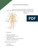 Anatomi Sistem Skeletal