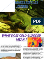 jacob petrous reptile ilp