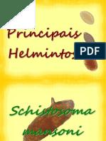 helmintos-091210111934-phpapp01