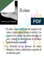 4 01 PAVYH craneo.pdf