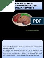 Organizacional Anatomofuncional Del Sistema Nervioso - Copia 3