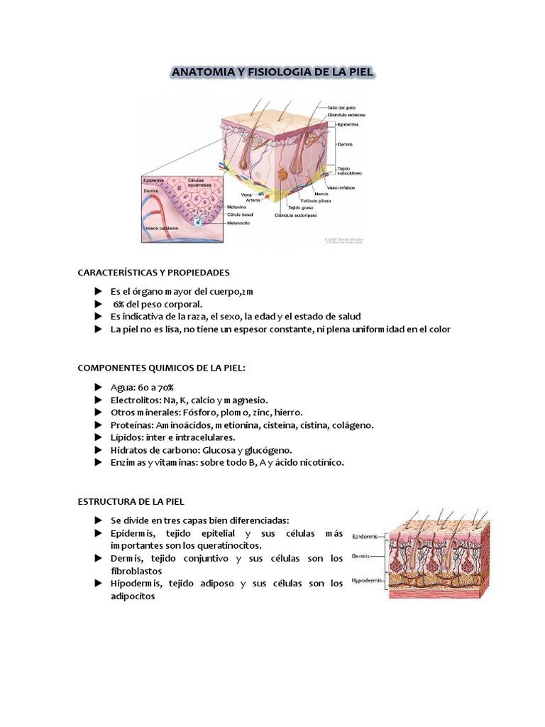 Informe Estructura de La Piel