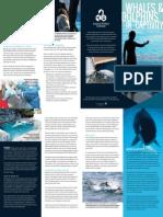 AWI ML WhalesDolphinsCaptivityEnglish