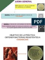 sesion-2-aislamiento-plasmidos