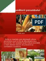 Bolile și dăunătorii porumbului