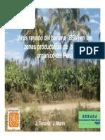 Virus en Banano y Platano-JTENORIO-Congreso Piura [Modo de Compatibilidad]