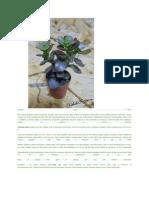 Razmnožavanje sobnog cveca reznicama