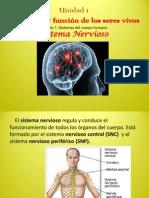 estructura y fnciones del sistema nervioso