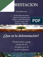 exposicion deforestacion
