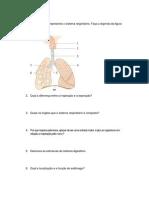 prova sistema urinario,respiratório e digestório
