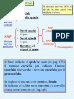 A2 Anatomia Visione d Insieme