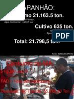 SEMAPA - São Luís Pescar