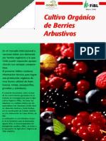 Cultiv Organico de Berries Arbustivos