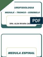 2. Medula Tronco y Cerebelo 2012