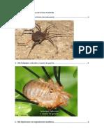Seguimiento de Los Ordenes de La Clase Arachnida