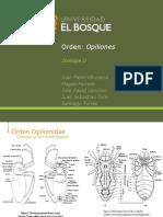 Opilionidae modif (1)