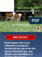 brucelosis-101004221804-phpapp01(1)