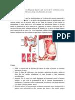 El colon es la última porción del aparato digestivo en la mayoría de los vertebrados