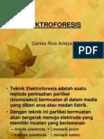 sel elektroforesis