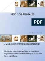 Modelos Animales Clase 2