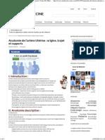 Anatomie de l'artère Utérine _ origine, trajet et rapports _ Cours De Medecine