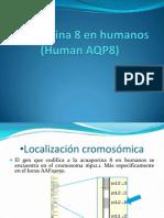 Acuaporina 8