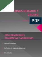 Intestino Delgado y Grueso (Parte 1)