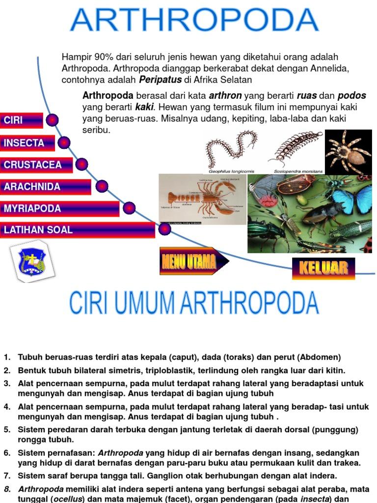 910 Gambar Kelompok Hewan Arthropoda HD