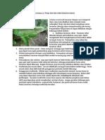 Pengendalian Pengorok Daun Liriomyza, Thrips, Dan Kutu Kebul