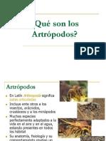 I Unidad Entomologia 1