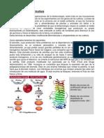 Biomoléculas en Agricultura