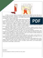 5 Proteção do complexo dentino-pulpar