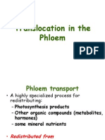 Talk 7 -Translocation in the Phloem