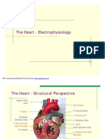 Cardiac Electrophysiology