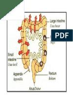 3 Rph t4 Struktur Penuh