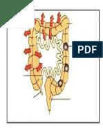 3 1 Rph t4 Struktur Organ Label