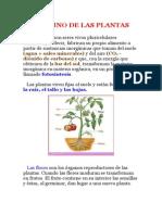 El Reino de Las Plantas Rosaura