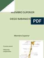 Miembro Superior