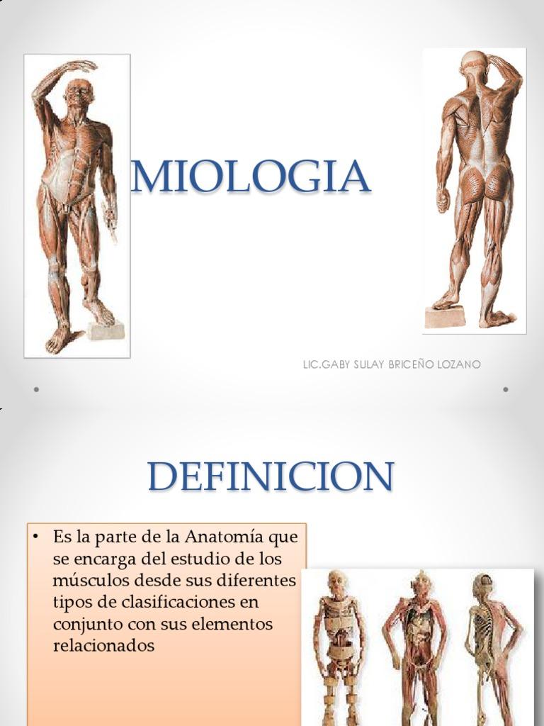 Lujoso Antagonista Anatomía Definición Inspiración - Imágenes de ...