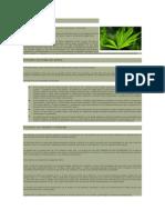 Extractos de Cannabis